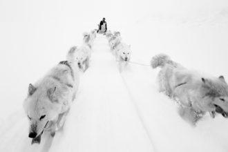 Artico. Ultima Frontiera - mostra
