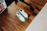 Olivia Oblanc - adidas Originals